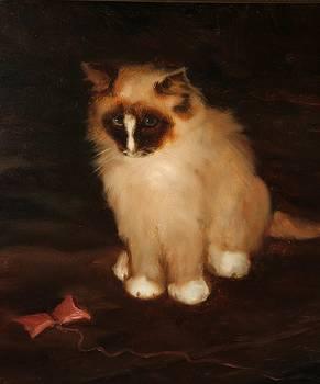 Cat by Michael Chesnakov