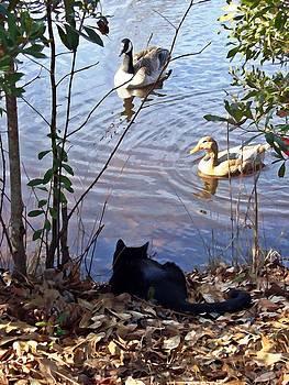 Cat Play by Joan Meyland