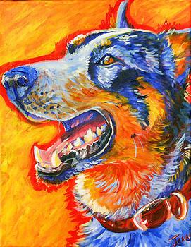 Cattle Dog by Jenn Cunningham