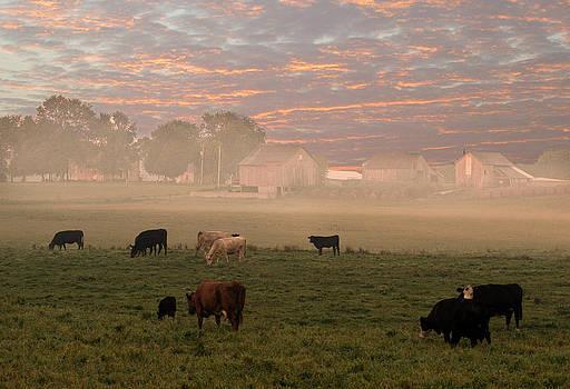 Randall Branham - Cattle in the fog
