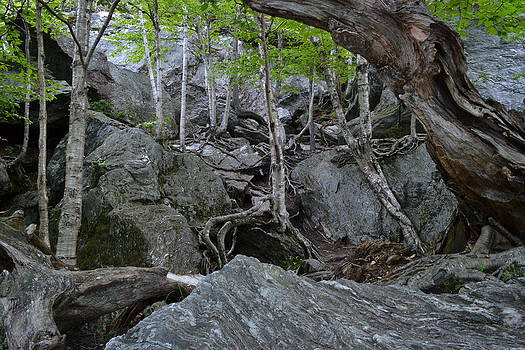 Caves Boulders and Walking Trees by Wendell Ducharme Jr