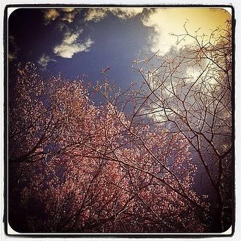 Cherry blossom and the sky by Dani Pimenta