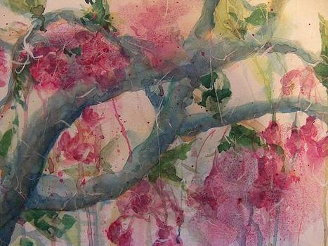 Cherry Blossoms by Sandy Collier