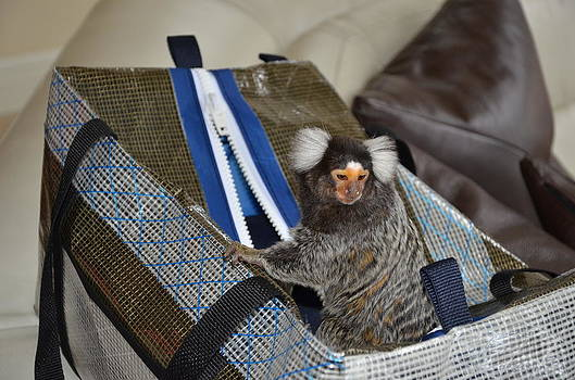 Chewy the Marmoset going Fishing by Barry R Jones Jr