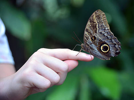Child With Owl Butterfly by Sandi OReilly