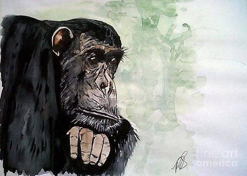 Chimpanzee Frodo I. by Paula Steffensen