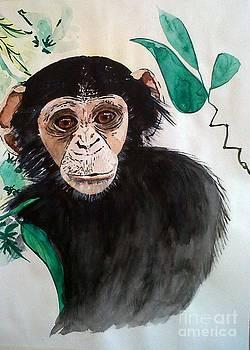 Chimpanzee I. by Paula Steffensen
