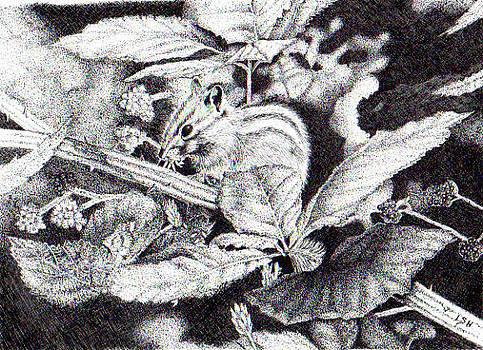 Chipmunk by Inger Hutton