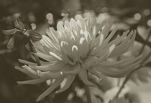 Xueling Zou - Chrysanthemum in Bloom