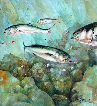 Chumming Bluefish by Peter Sit