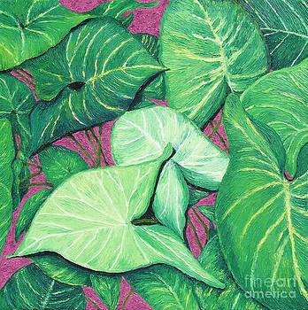 Cintia's Plant by Barbara Nolan