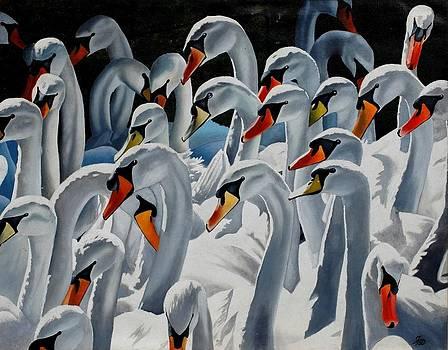 Claddagh Swans by Bob Fox