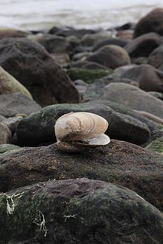Clam On Rock by Krista Pandiscio
