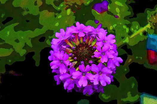 Color Me Violet by Bob Whitt