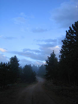 Colorado Pine Forest In Mist by Ric Soulen