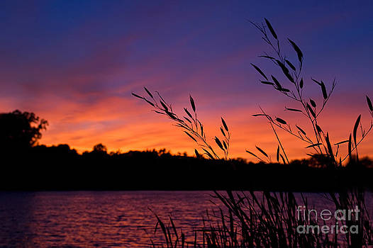 Colorful Sunset by Dolly Genannt