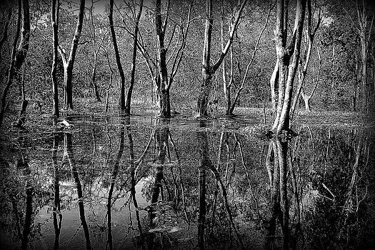 Colorless Serenity by Greg Palmer
