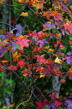 Colors by Bob Whitt
