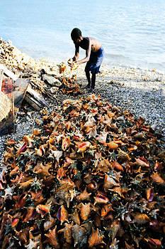 Johnny Sandaire - Conch Shell Farm