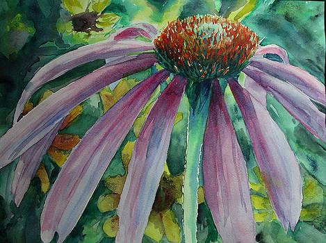 Cone Flower by David Ignaszewski