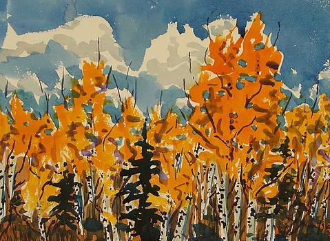 Confetti Aspen Fall Steamboat Springs Colorado by Zanobia Shalks