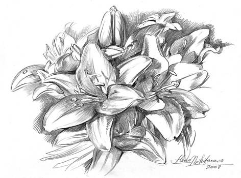 Conte pencil sketch of Lilies by Alena Nikifarava