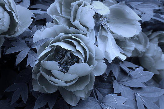 Cool Petals by Lynn Wohlers