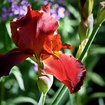 Teresa Mucha - Copper Iris Squared 1