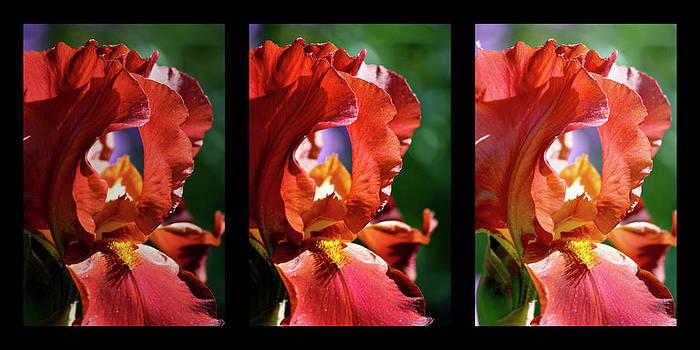 Teresa Mucha - Copper Iris Triptych