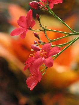 Alfred Ng - coral bush