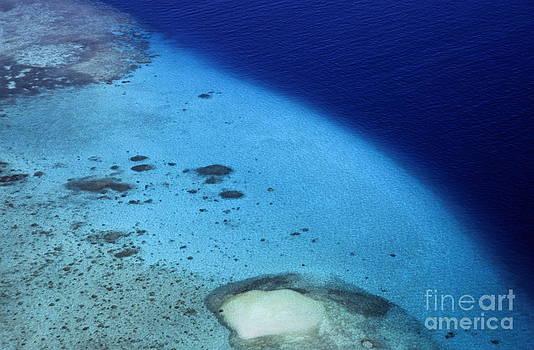 Sami Sarkis - Coral reef in Noumea lagoon