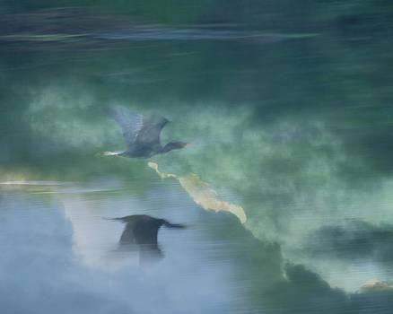Cormorant taking Flight by Pamela Rose Hawken