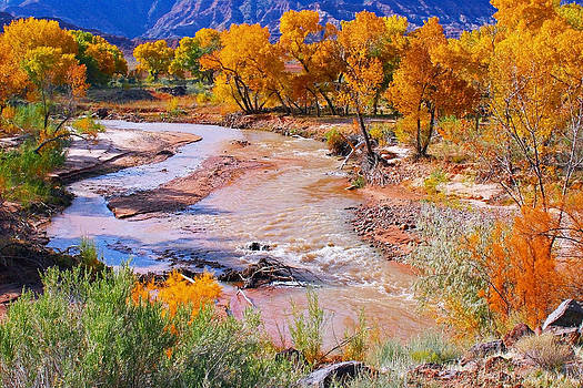 Cottonwoods at Virgin River by Sharon I Williams