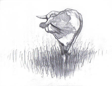 Cow Looking Back by Di Fernandes