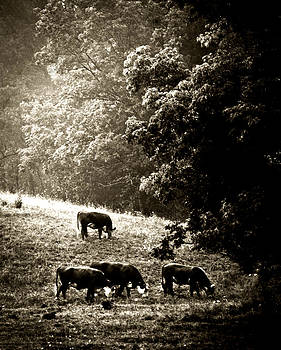 Cows Breaking Their Fast by Steve Buckenberger