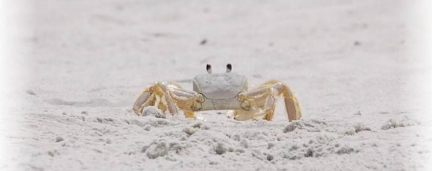 Judy Hall-Folde - Crabby Eyes