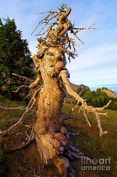 Adam Jewell - Crater Lake Kachina