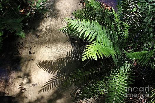 Creek Fern Shadows by Theresa Willingham