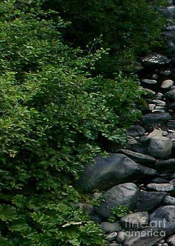 Peter Piatt - Creek Flow Panel 1