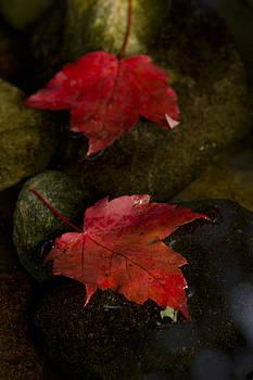 Crimson Autumn by Megan Noble