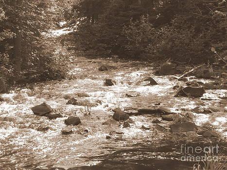 Sue Wild Rose - Crooked Creek - Sepia