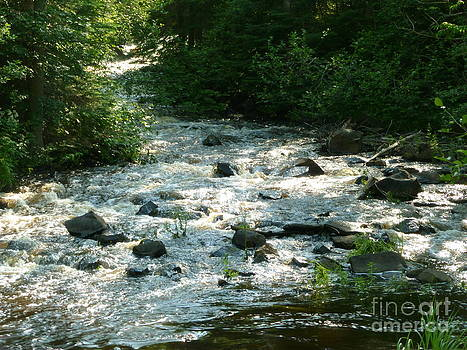 Sue Wild Rose - Crooked Creek