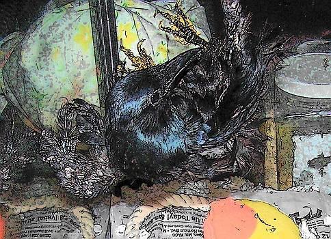Crow Rehab by YoMamaBird Rhonda