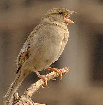 Crying Bird by Neeraj Vegad