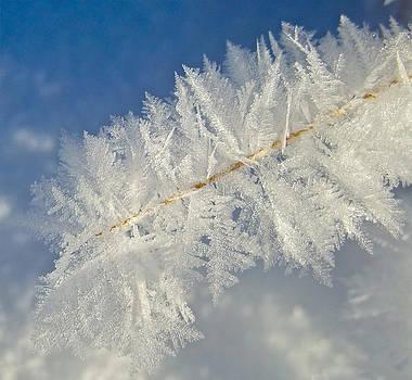 Bob Berwyn - Crystal Perfection
