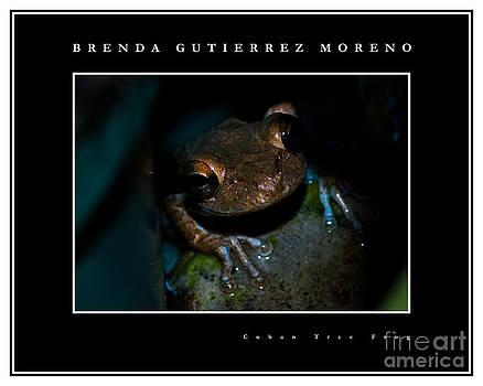 Cuban Tree Frog black border by Brenda Gutierrez Moreno