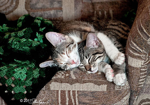 Steve Knievel - Cuddling