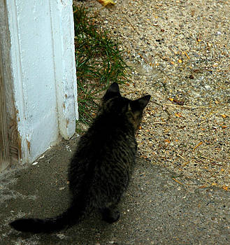LeeAnn McLaneGoetz McLaneGoetzStudioLLCcom - Curious Kitten