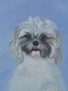 Cute Puppy by Arlene Gibbs