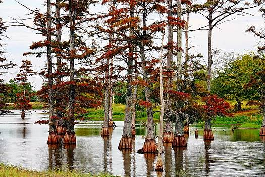 KayeCee Spain - Cypress In Autumn